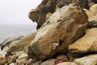 Rock climber Kevin Jorgeson ascending a sandstone boulder at Salt Point State Park, Sonoma Coast, Calfornia